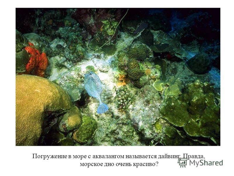 Под водой ныряльщики через специальную трубку дышат кислородом, который находится в баллоне акваланга.