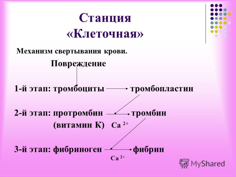 Станция «Клеточная» 1. Строение и функция тромбоцитов. -форма -наличие ядра -где образуется -сколько живут? -где разрушаются -содержание в 1 мм 3 -функция