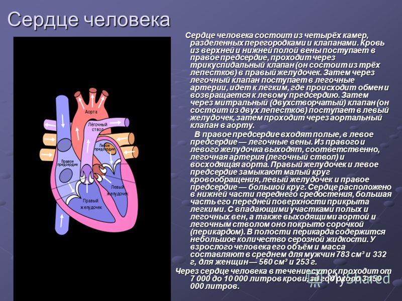 Сердце человека Сердце человека состоит из четырёх камер, разделенных перегородками и клапанами. Кровь из верхней и нижней полой вены поступает в правое предсердие, проходит через трикуспидальный клапан (он состоит из трёх лепестков) в правый желудоч