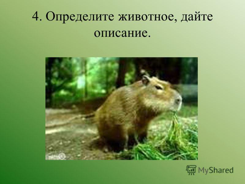 4. Определите животное, дайте описание.