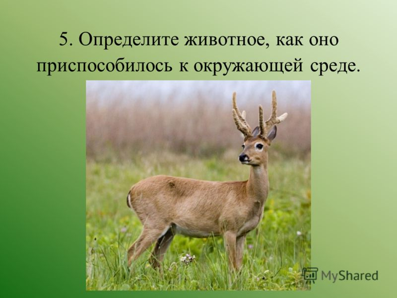 5. Определите животное, как оно приспособилось к окружающей среде.