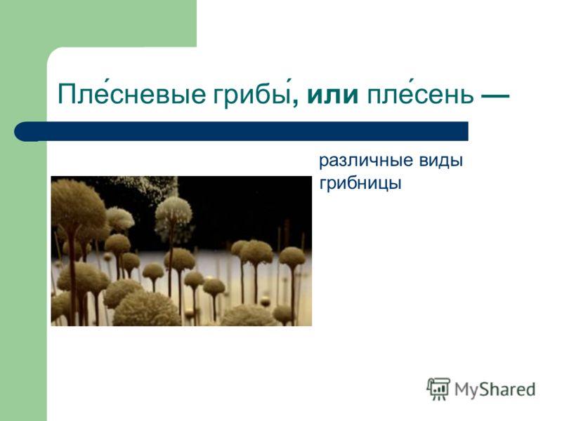 Пле́сневые грибы́, или пле́сень различные виды грибницы