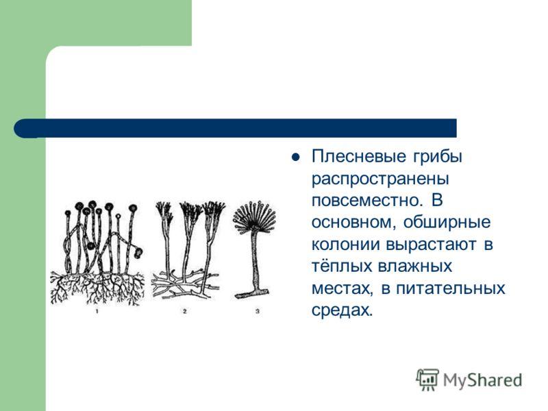 Плесневые грибы распространены повсеместно. В основном, обширные колонии вырастают в тёплых влажных местах, в питательных средах.