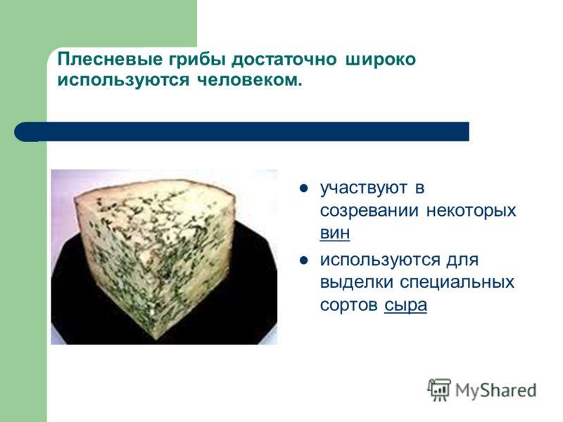 Плесневые грибы достаточно широко используются человеком. участвуют в созревании некоторых вин вин используются для выделки специальных сортов сырасыра
