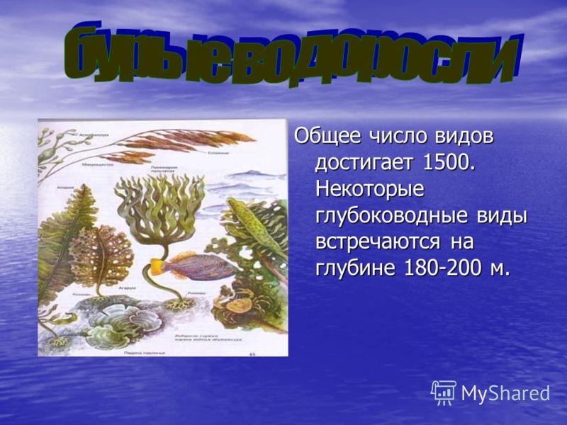 Общее число видов достигает 1500. Некоторые глубоководные виды встречаются на глубине 180-200 м.