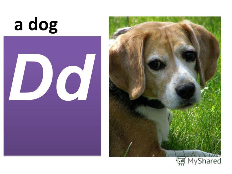 a dog Dd