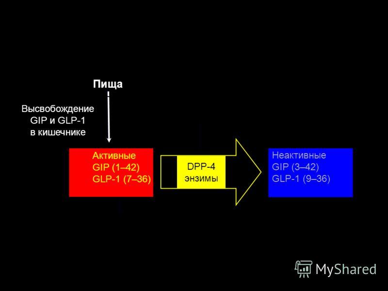 Высвобождение GIP и GLP-1 в кишечнике Активные GIP (1–42) GLP-1 (7–36) Пища Неактивные GIP (3–42) GLP-1 (9–36) Rapid degradation (minutes) DPP-4 энзимы