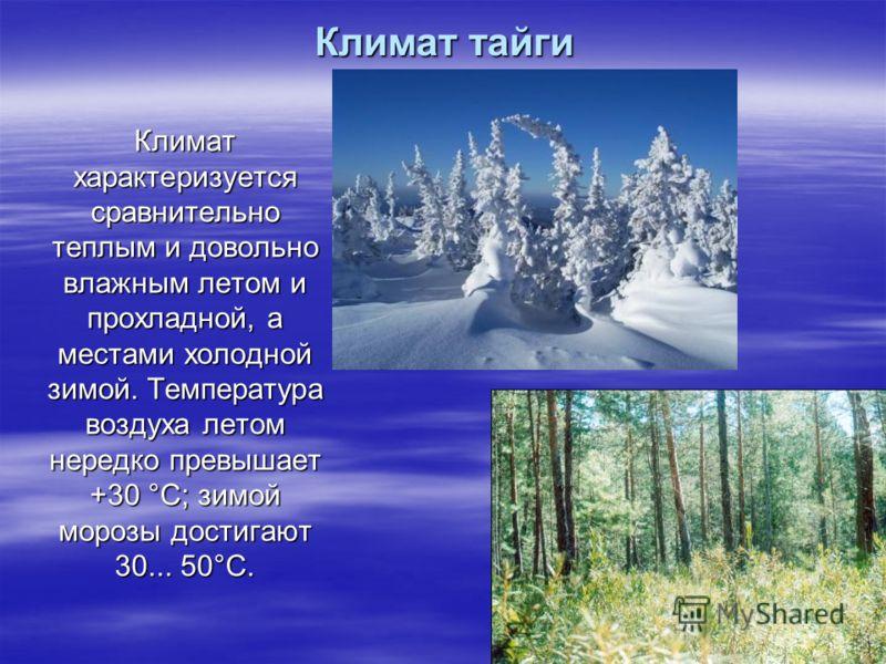 Климат тайги Климат характеризуется сравнительно теплым и довольно влажным летом и прохладной, а местами холодной зимой. Температура воздуха летом нередко превышает +30 °С; зимой морозы достигают 30... 50°С.