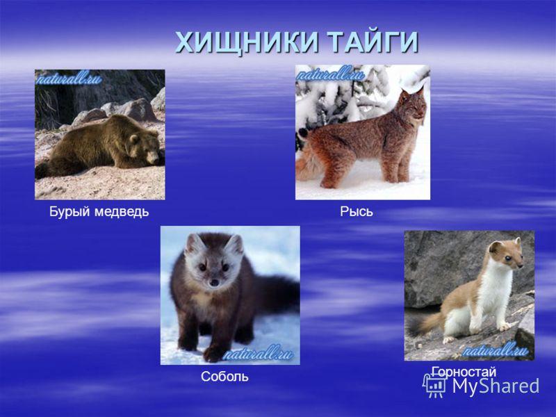 ХИЩНИКИ ТАЙГИ Бурый медведьРысь Соболь Горностай
