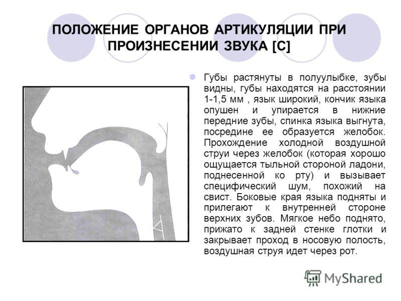 ПОЛОЖЕНИЕ ОРГАНОВ АРТИКУЛЯЦИИ ПРИ ПРОИЗНЕСЕНИИ ЗВУКА [С] Губы растянуты в полуулыбке, зубы видны, губы находятся на расстоянии 1-1,5 мм, язык широкий, кончик языка опушен и упирается в нижние передние зубы, спинка языка выгнута, посредине ее образует