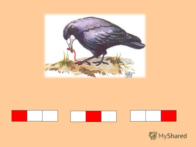 Всех прилетных птиц черней, Чистит пашню от червей. Целый день по пашне вскачь И зовется птица …
