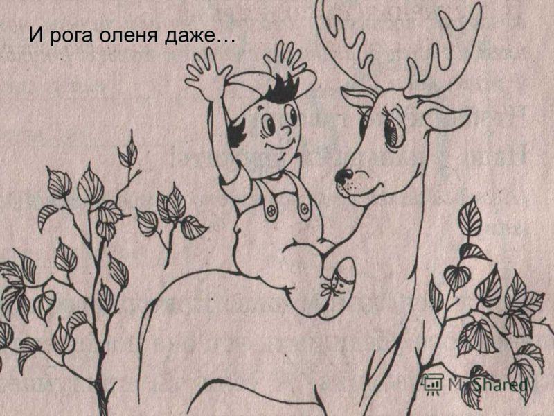 И рога оленя даже…