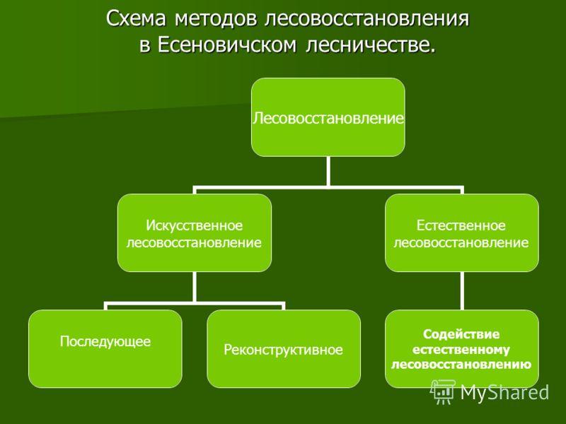 Схема методов лесовосстановления в Есеновичском лесничестве. Лесовосстановление Искусственное лесовосстановление Последующее Реконструктивное Естественное лесовосстановление Содействие естественному лесовосстановлению