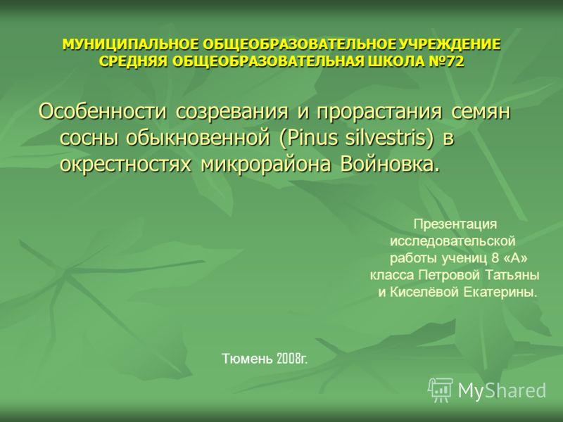 МУНИЦИПАЛЬНОЕ ОБЩЕОБРАЗОВАТЕЛЬНОЕ УЧРЕЖДЕНИЕ СРЕДНЯЯ ОБЩЕОБРАЗОВАТЕЛЬНАЯ ШКОЛА 72 Особенности созревания и прорастания семян сосны обыкновенной (Pinus silvestris) в окрестностях микрорайона Войновка. Тюмень 2008 г. Презентация исследовательской работ