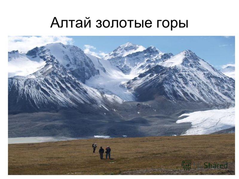 Алтай золотые горы