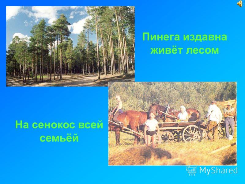 Пинега издавна живёт лесом На сенокос всей семьёй