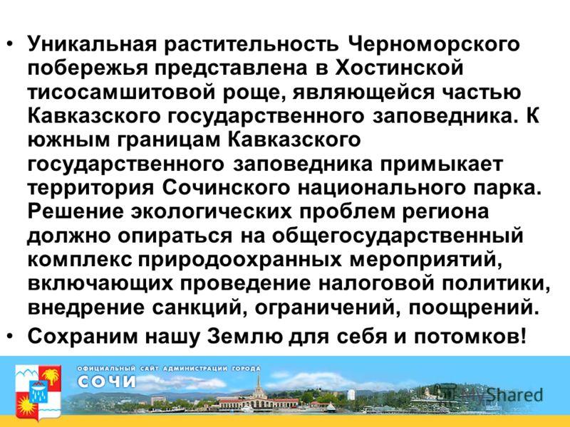 Уникальная растительность Черноморского побережья представлена в Хостинской тисосамшитовой роще, являющейся частью Кавказского государственного заповедника. К южным границам Кавказского государственного заповедника примыкает территория Сочинского нац