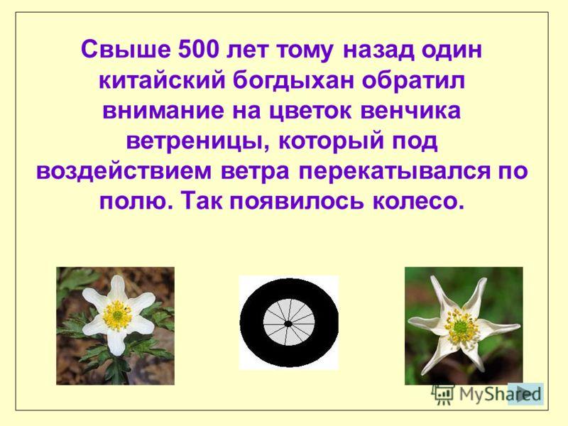 Свыше 500 лeт тому назад один китайский богдыхан обратил внимание на цветок венчика ветреницы, который под воздействием ветра перекатывался по полю. Так появилось колесо.