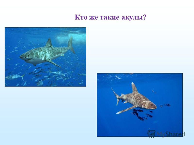 Кто же такие акулы?