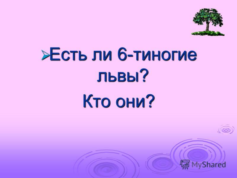 ли 6: