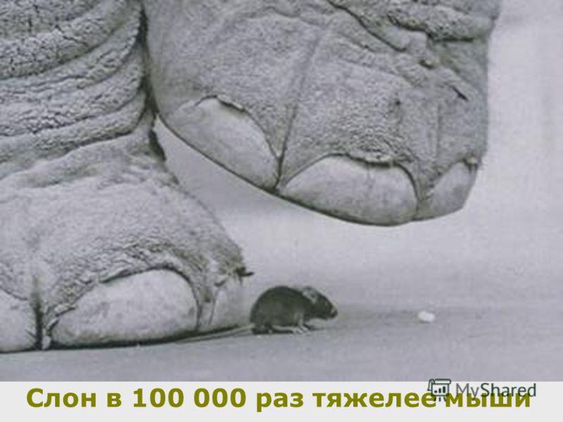Слон в 100 000 раз тяжелее мыши
