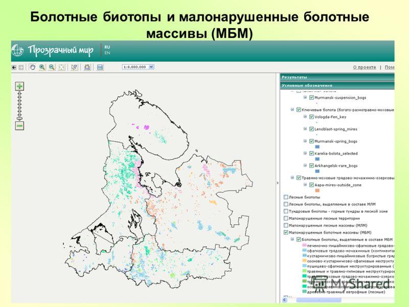 Болотные биотопы и малонарушенные болотные массивы (МБМ)