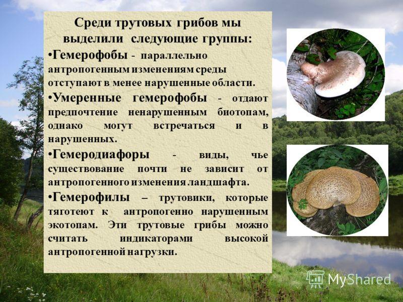 Среди трутовых грибов мы выделили следующие группы: Гемерофобы - параллельно антропогенным изменениям среды отступают в менее нарушенные области. Умеренные гемерофобы - отдают предпочтение ненарушенным биотопам, однако могут встречаться и в нарушенны