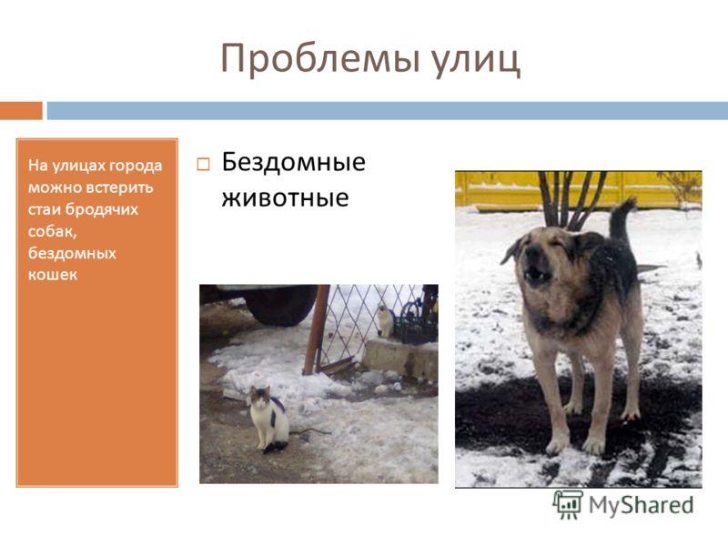 Проблемы улиц На улицах города можно встерить стаи бродячих собак, бездомных кошек Бездомные животные