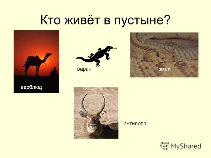 Кто живёт в пустыне? верблюд змеиваран антилопа