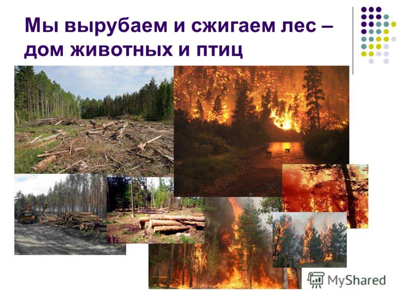 Мы вырубаем и сжигаем лес – дом животных и птиц