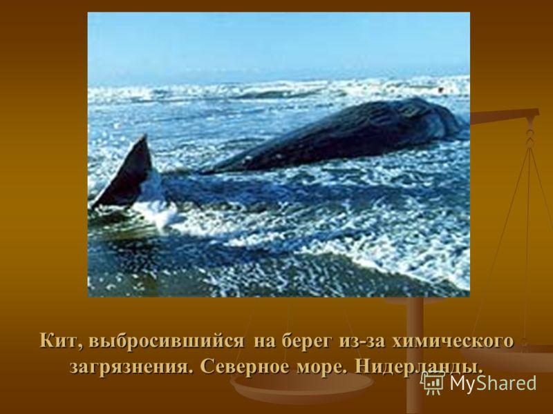 Последствия аварии на нефтепроводе Коми. 1996 г.