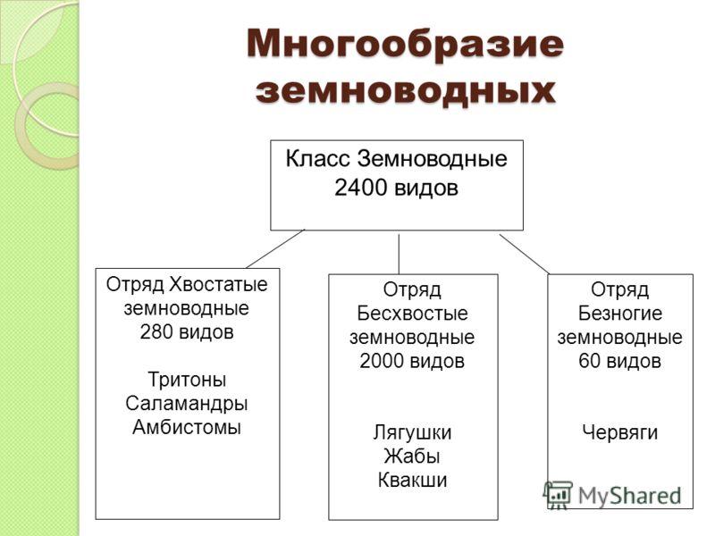 Многообразие земноводных Класс Земноводные 2400 видов Отряд Хвостатые земноводные 280 видов Тритоны Саламандры Амбистомы Отряд Безногие земноводные 60