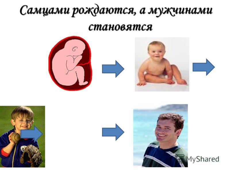 Самцами рождаются, а мужчинами становятся