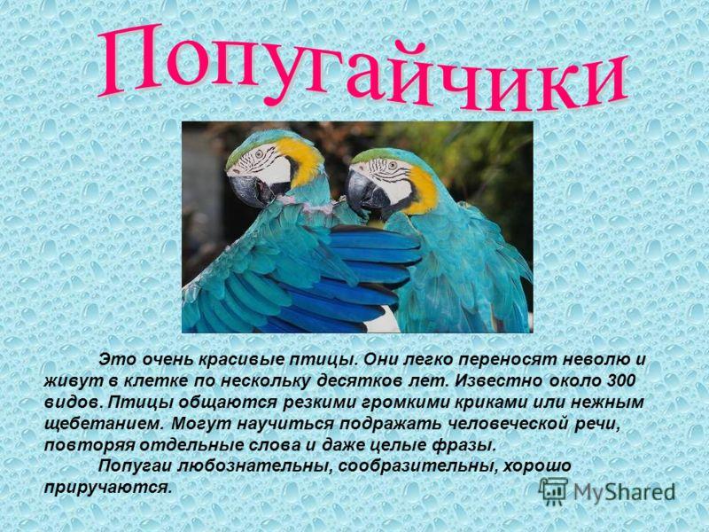Это очень красивые птицы. Они легко переносят неволю и живут в клетке по нескольку десятков лет. Известно около 300 видов. Птицы общаются резкими громкими криками или нежным щебетанием. Могут научиться подражать человеческой речи, повторяя отдельные