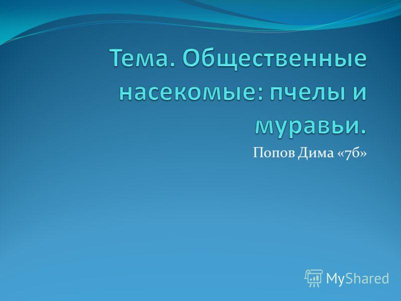 Попов Дима «7б»