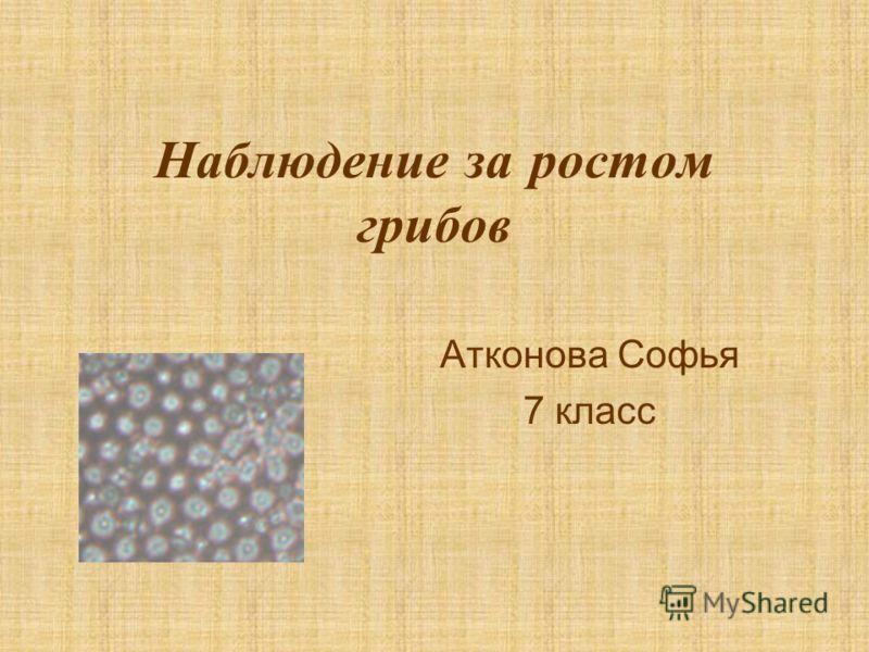 Наблюдение за ростом грибов Атконова Софья 7 класс