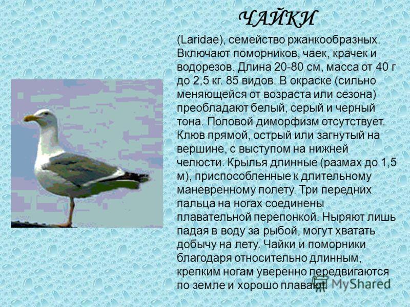ЧАЙКИ (Laridae), семейство ржанкообразных. Включают поморников, чаек, крачек и водорезов. Длина 20-80 см, масса от 40 г до 2,5 кг. 85 видов. В окраске (сильно меняющейся от возраста или сезона) преобладают белый, серый и черный тона. Половой диморфиз
