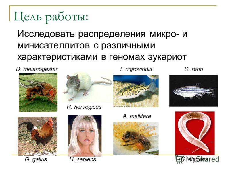 Цель работы: Исследовать распределения микро- и минисателлитов с различными характеристиками в геномах эукариот D. melanogaster H. sapiens R. norvegicus G. gallus C. elegans A. mellifera T. nigroviridisD. rerio