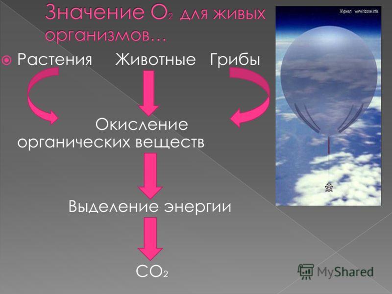 Растения Животные Грибы Окисление органических веществ Выделение энергии СО 2