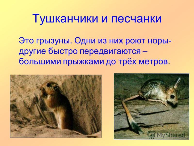 Тушканчики и песчанки Это грызуны. Одни из них роют норы- другие быстро передвигаются – большими прыжками до трёх метров.