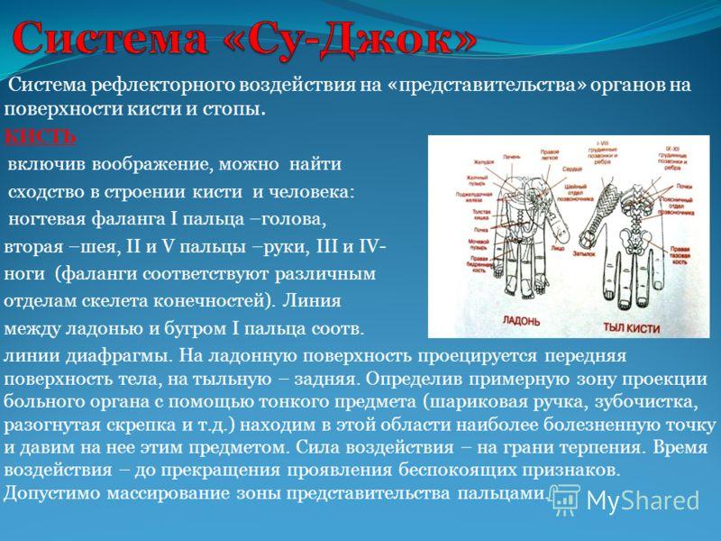 Система рефлекторного воздействия на «представительства» органов на поверхности кисти и стопы. КИСТЬ включив воображение, можно найти сходство в строении кисти и человека: ногтевая фаланга I пальца –голова, вторая –шея, II и V пальцы –руки, III и IV-
