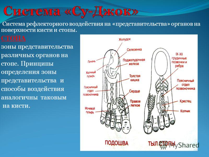 Система рефлекторного воздействия на «представительства» органов на поверхности кисти и стопы. СТОПА зоны представительства различных органов на стопе. Принципы определения зоны представительства и способы воздействия аналогичны таковым на кисти.