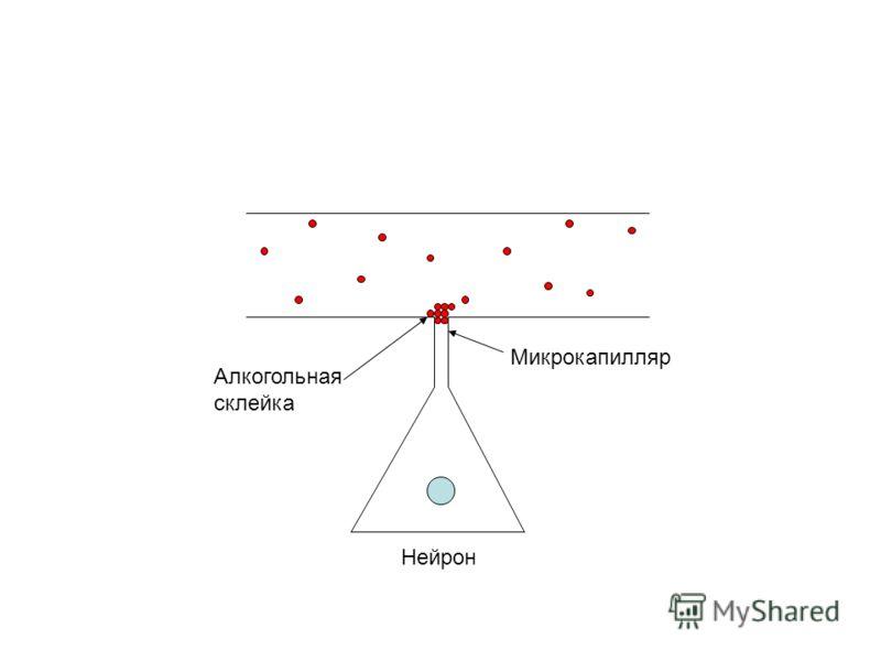 Нейрон Микрокапилляр Алкогольная склейка
