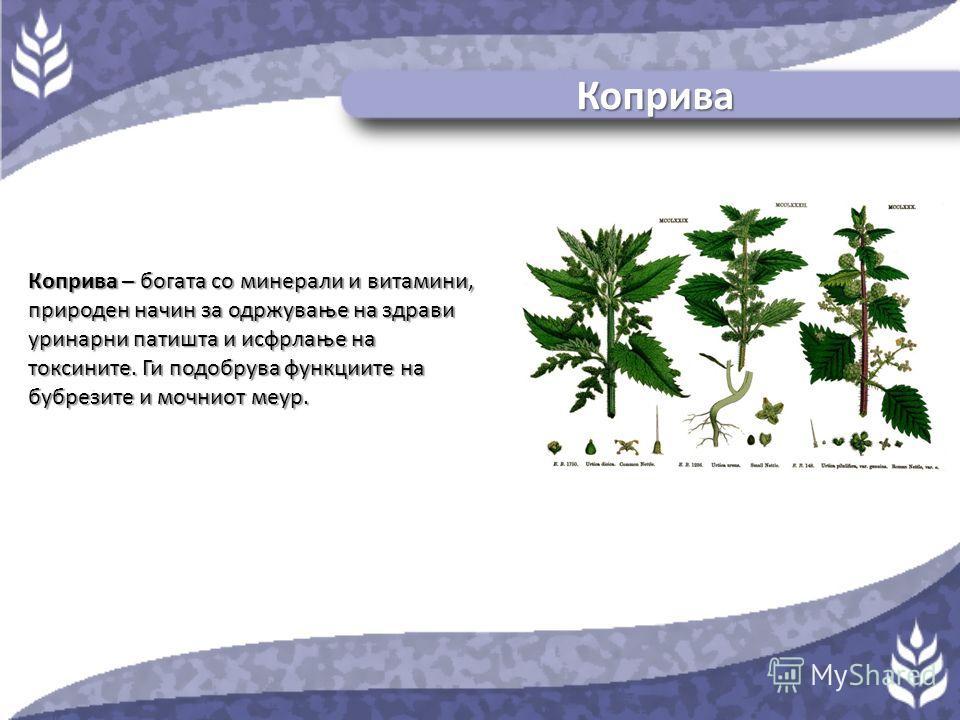 Мечкино грозје Мечкино грозје – благ диуретик и традиционален хербален лек за инфекции на уринарниот тракт.