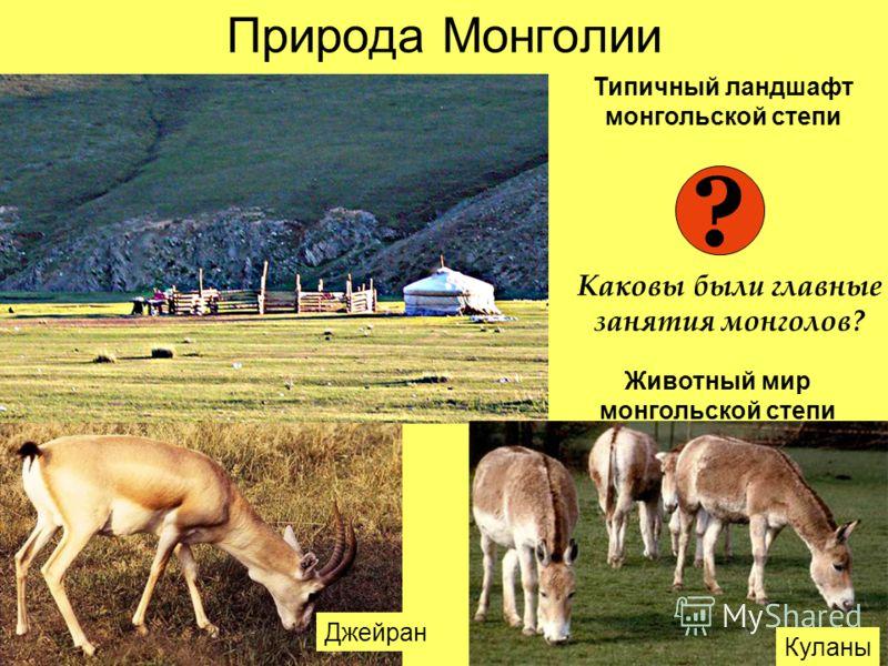 Природа Монголии Куланы Джейран Типичный ландшафт монгольской степи Животный мир монгольской степи ? Каковы были главные занятия монголов?