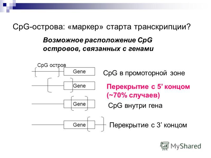 CpG-острова: «маркер» старта транскрипции? Возможное расположение CpG островов, связанных с генами Gene CpG остров Gene CpG в промоторной зоне Gene CpG внутри гена Gene Перекрытие с 3 концом Перекрытие с 5 концом (~70% случаев)