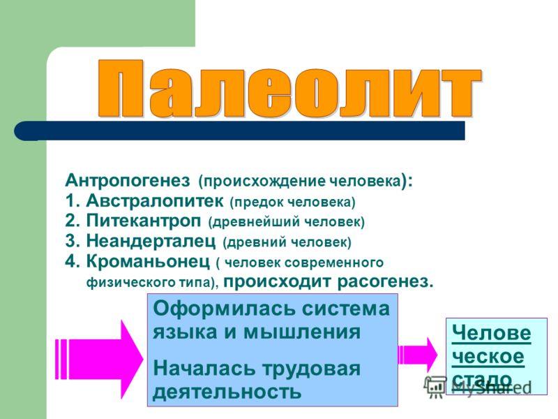 Антропогенез (происхождение человека ): 1.Австралопитек (предок человека) 2.Питекантроп (древнейший человек) 3.Неандерталец (древний человек) 4.Кроманьонец ( человек современного физического типа), происходит расогенез. Оформилась система языка и мыш