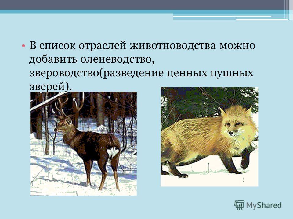 В список отраслей животноводства можно добавить оленеводство, звероводство(разведение ценных пушных зверей).