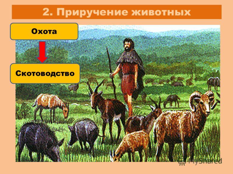 2. Приручение животных Охота Скотоводство