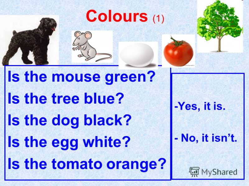 Colours (1) Is the mouse green? Is the tree blue? Is the dog black? Is the egg white? Is the tomato orange? -Yes, it is. - No, it isnt.
